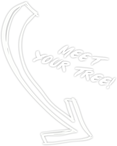 Meet Your Tree!